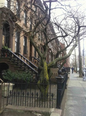 Brownstones-de-New-York1
